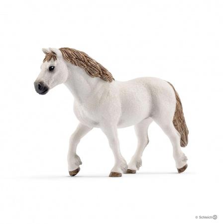 Ponette De Race Galloise